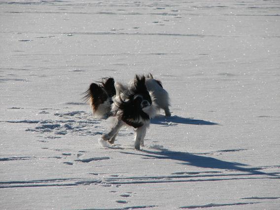 Rocky och Tage gillar snö