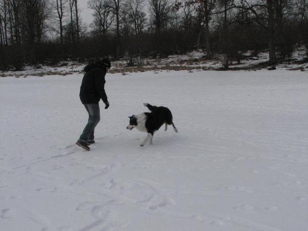 Victor och Troll leker med en pinne :)