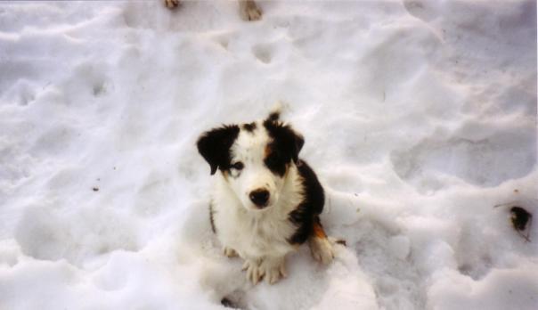 Troll på snö